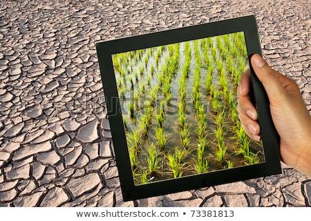 dry mud field Stock photo © devon