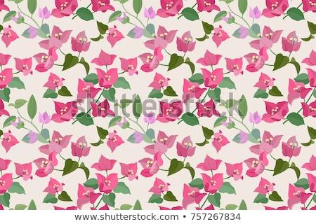Pink bougainvillea flowers on seamless background Stock photo © colematt