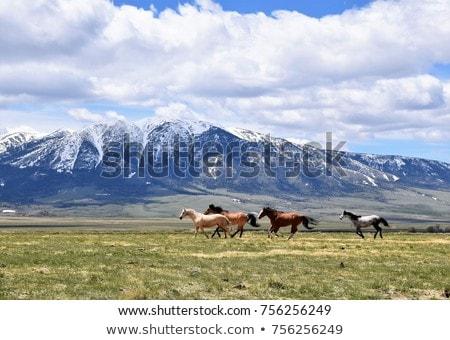 paard · heuvel · mooie · silhouet · permanente · omhoog - stockfoto © andreypopov