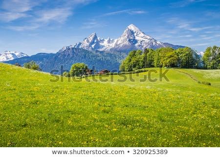 Alpino prato Germania alpi erba foresta Foto d'archivio © dmitry_rukhlenko