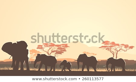 herd of elephants at sundown stock photo © hofmeester