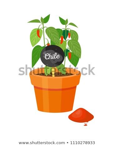 チリ 工場 ポット 植物 赤 ストックフォト © robuart