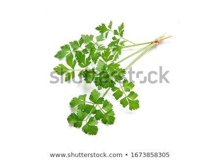 Perejil especias planta aislado blanco verde Foto stock © robuart