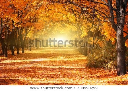 ősz sikátor kilátás park narancs út Stock fotó © boggy
