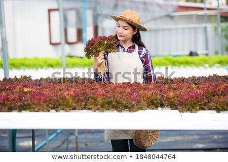 Kép gyönyörű nő kertész tanul növények üvegház Stock fotó © deandrobot