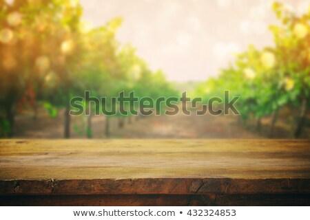 Blurred backdrop with sunny landscape of vineyard Stock photo © karandaev