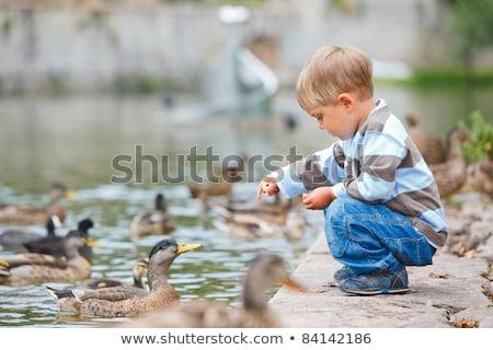 Feeding the ducks Stock photo © ivonnewierink