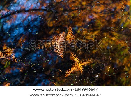 Leaves in the oily water Stock photo © Nneirda