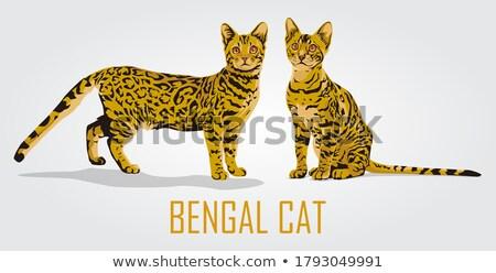 кошки иллюстрация акварель эскиз домой Сток-фото © ConceptCafe