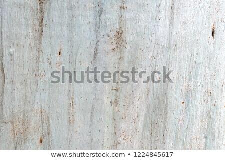 вечнозеленый · кустарник · бесшовный · текстуры · лист - Сток-фото © smuki