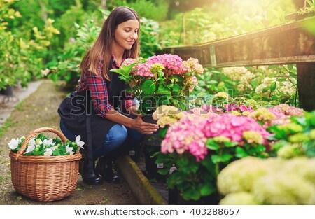 Woman gardener holding plant in greenhouse. Stock photo © deandrobot