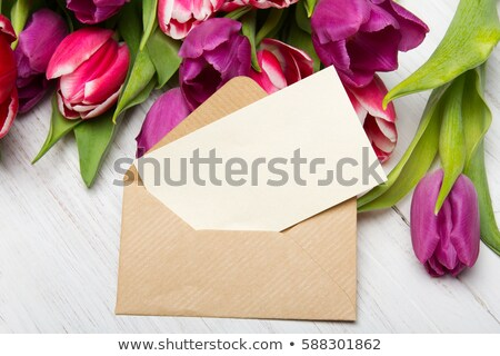 White tulips in an envelope on a purple background. Stock photo © artjazz