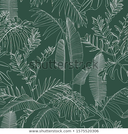 Fan Green Palm Exotic Plant Foliage Design Vector Stock photo © robuart