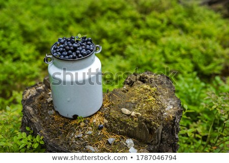 Jug full of blueberry with green leaf  Stock photo © dash