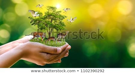 рисованной · тропические · растений · цветок · листьев - Сток-фото © robuart