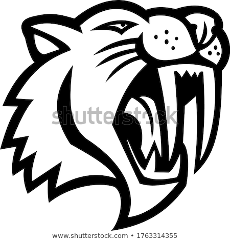 Angry Saber Toothed Cat Head Mascot Black and White Stock photo © patrimonio
