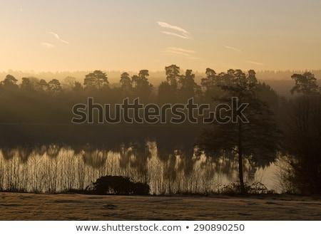 Forêt aube longtemps ombres silhouettes ciel Photo stock © suerob