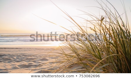 Erba sabbia crescita acqua sole abstract Foto d'archivio © taden