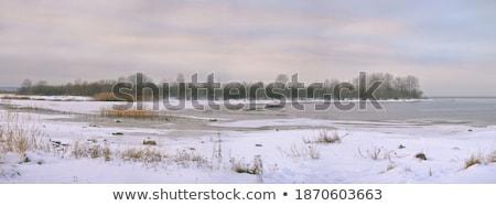 Hiver jour forêt ciel bleu paysage neige Photo stock © taden