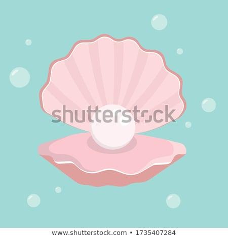 Seashell. Sea Cockleshell Stock photo © ryhor