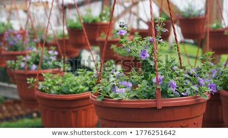 Flower Seedling Stock photo © devon