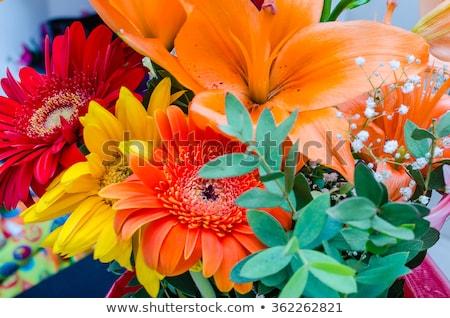 Gruppo colore fiore stock foto natura Foto d'archivio © nalinratphi