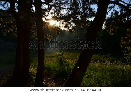 山 ウクライナ 空 家 風景 夏 ストックフォト © artfotoss
