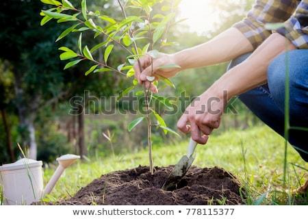 молодые дерево мнение белый лист Сток-фото © caimacanul