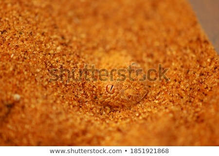 Sand Sidewinders Stock photo © emattil