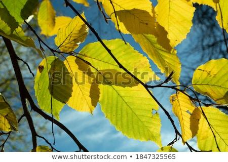 Pormenor folhas harmônico cores floresta indiano Foto stock © meinzahn