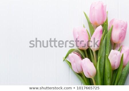 Buquê fresco rosa tulipas páscoa natureza Foto stock © Moravska