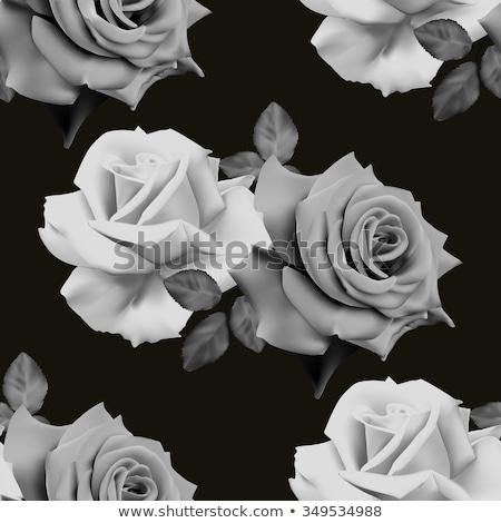 siyah · beyaz · çiçek · yalıtılmış · karanlık · bahar · soyut - stok fotoğraf © beholdereye