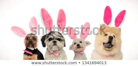 four dogs team ready for easter stock photo © feedough