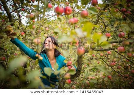 mujer · manzanas · alimentos · naturaleza · belleza - foto stock © kzenon