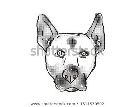 Belgian Malinois Dog Breed Cartoon Retro Drawing Stock photo © patrimonio
