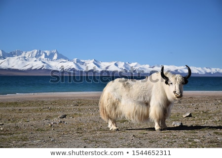 Branco tibete água nuvens paisagem Foto stock © bbbar