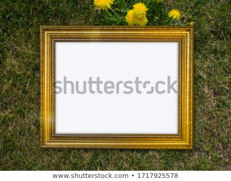 photo presenting field of dandelions stock photo © konradbak