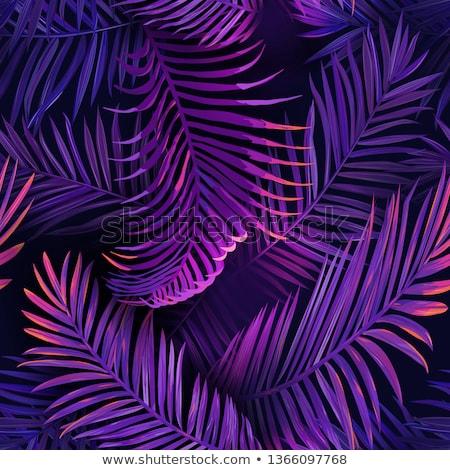 Purple растений различный фоны солнце аннотация Сток-фото © chrisbradshaw