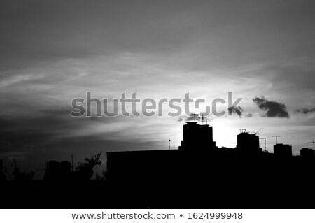 Typisch cubaans landschap palmbomen zon veld Stockfoto © haraldmuc