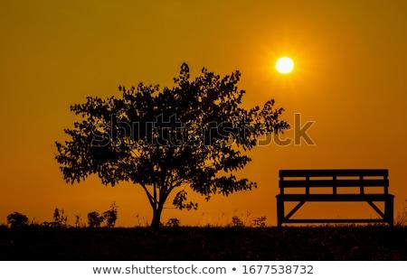 Silhuetas árvores pôr do sol floresta paisagem fundo Foto stock © dmitry_rukhlenko