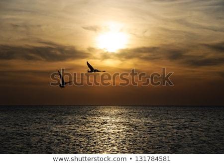sunrise on seashore with flying birds stock photo © bdspn