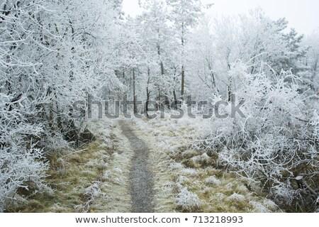 苔 氷 冬 露 雪 緑 ストックフォト © nailiaschwarz