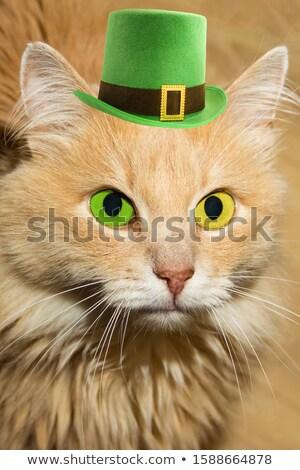 Funny cat in green leprechaun hat Stock photo © furmanphoto