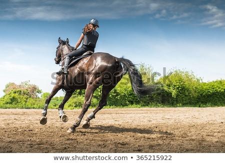 Tenyésztés ló lovas sport fej közelkép Stock fotó © ElenaBatkova