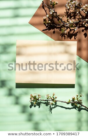 Empty card with shadow of a blooming tree Stock photo © furmanphoto