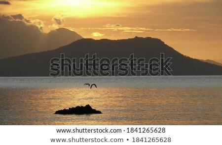 Stock photo: Birds on the rock