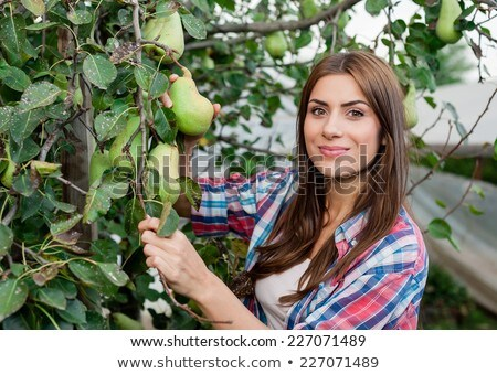 Photo stock: Poires · verger · femme · fruits · été