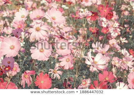 Grama verde primavera sol grama Foto stock © mycola