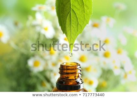 Natural Remedy Stock photo © tangducminh