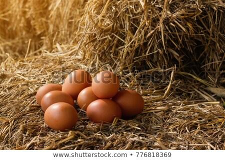 Taze tavuk yumurta atış yalıtılmış Stok fotoğraf © Vitalina_Rybakova